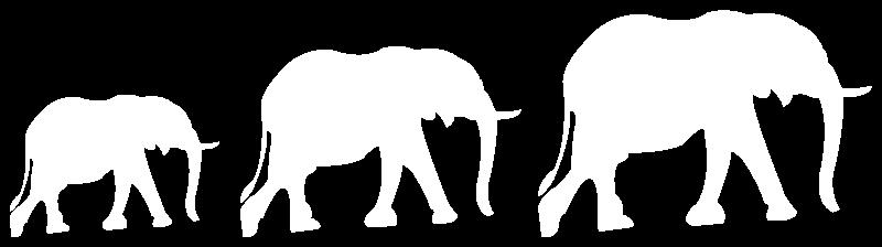 George Halliday Safaris Elephants
