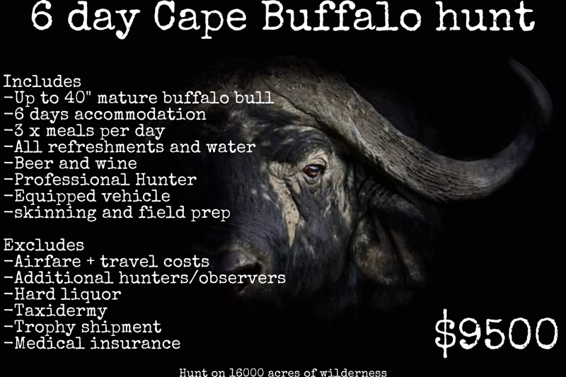 Cape Buffalo Hunting Package at George Halliday